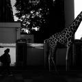Ceslovas Cesnakevicius: Zoo