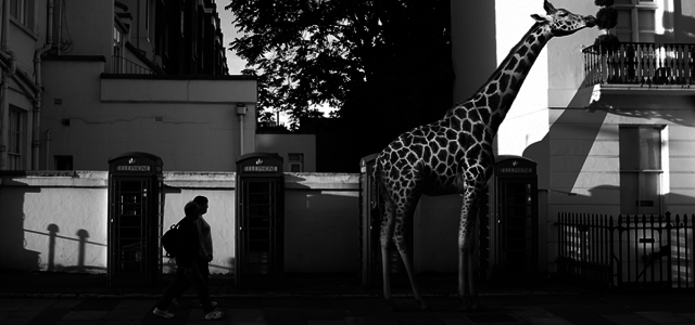 animals-in-streets-photography-the-zoo-ceslovas-cesnakevicius-fb-backup